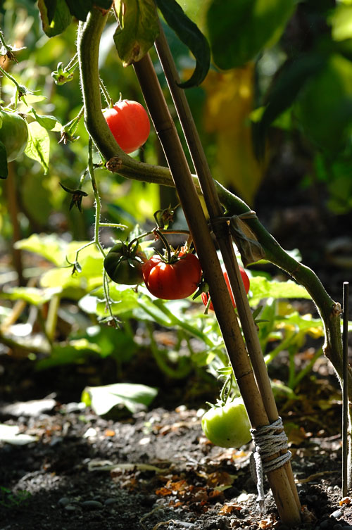 """""""We may think we are nurturing our garden, but of course it's our garden that is really nurturing us."""" ~ Jenny Uglow"""