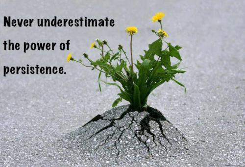 "Image: ""Never underestimate the power of persistence."" ~ Unknown"